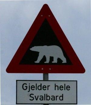 Isole Svalbard - Longyearbyen - cartello pericolo orsi