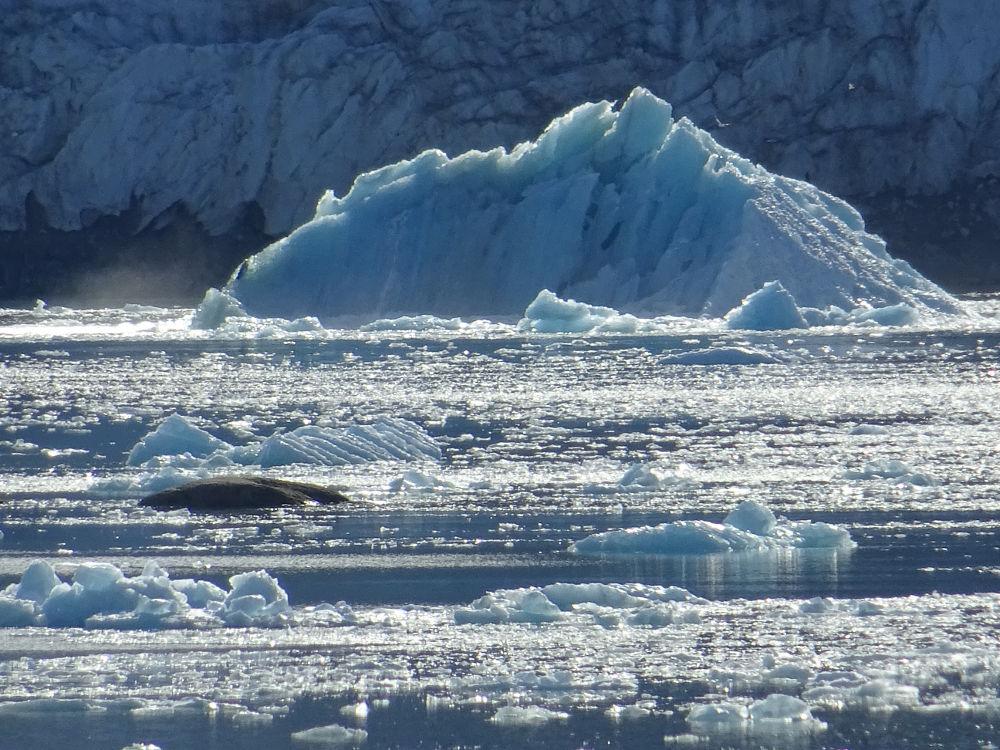 Svalbard Islands - Smeerenburg Glacier - iceberg