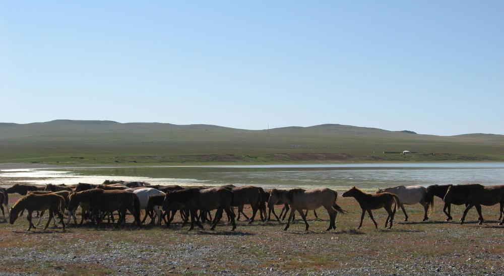 Mongolia - Gun Galuut - mandrie