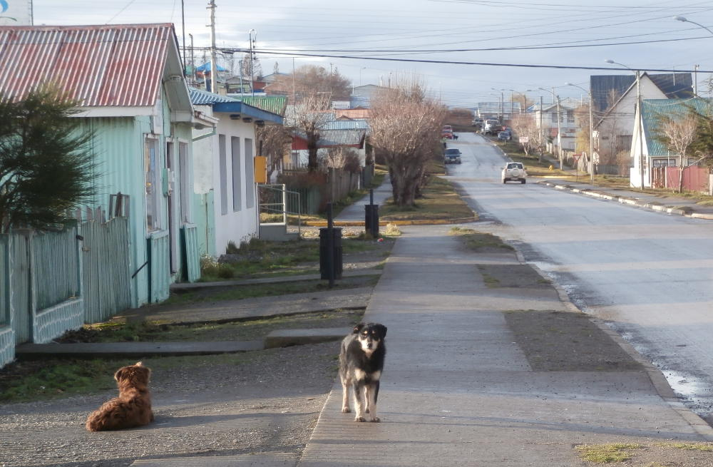 Chile - Patagonia - dogs in a Porvenir street