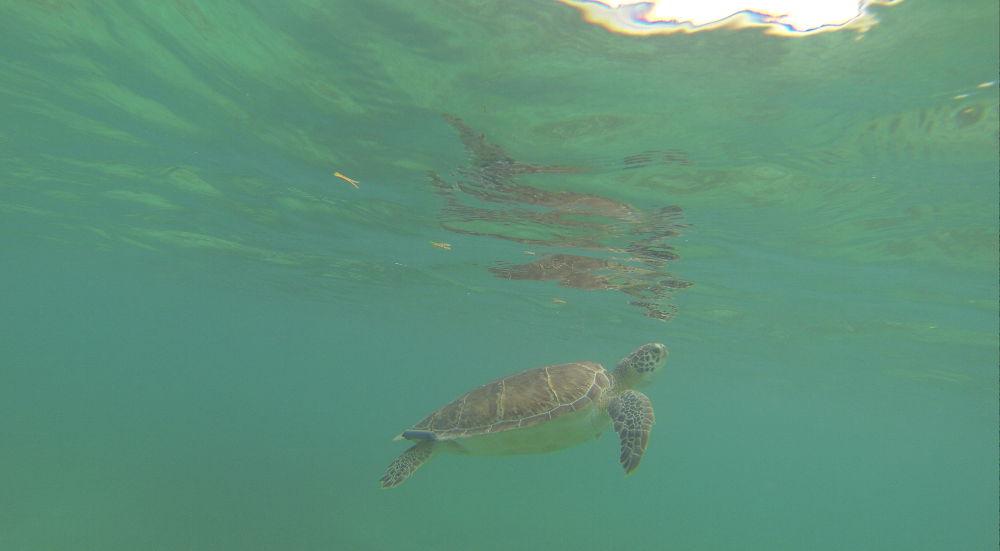 Messico-Akumal-tartaruga