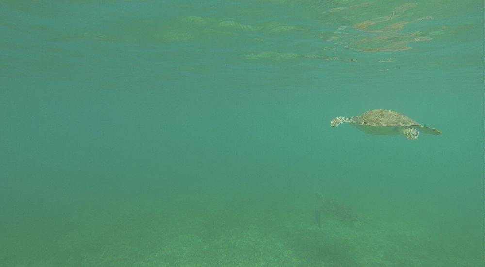 Messico-Akumal-tartarughe