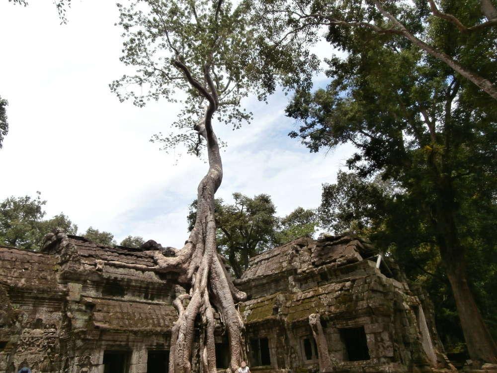 Cambodia - Angkor - Ta Prohm