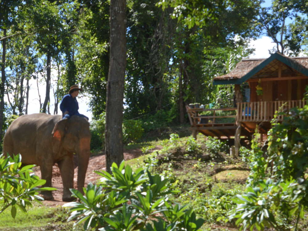 Laos - ECC Elephant Conservation Center