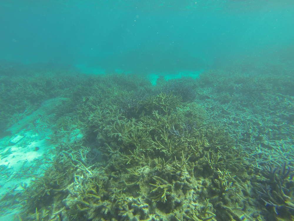 Tuvalu - fondale Laguna Te Namo